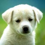 Cute Dog HD Wallpapers