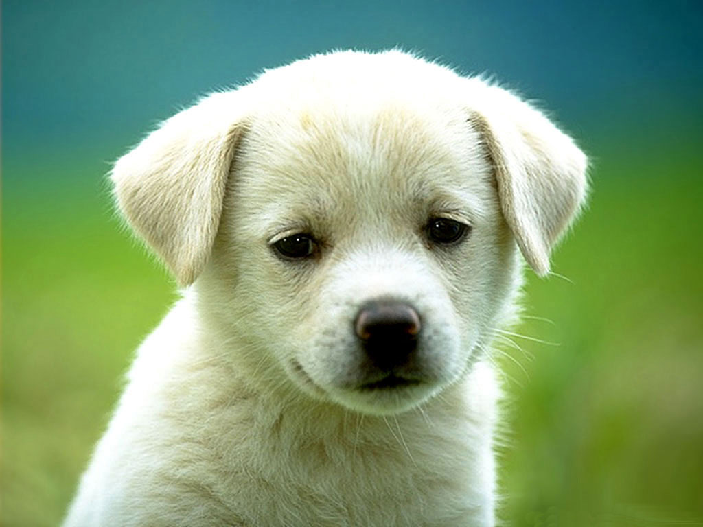cute dog hd wallpapers | free download hd wallpapers