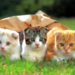 Cute Funny Cats Wallpaper