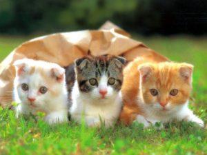 Cute Funny Cats Wallpaper