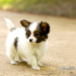 Dog HD pictures