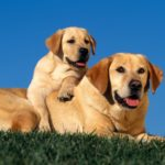 Dog and puppy hd wallpapers