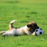 Puppy dogs hd wallpaper