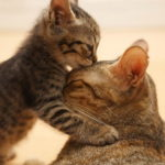 Very cute cat hd wallpapers (1)