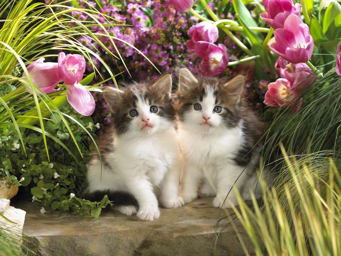 Beautiful Cat Wallpapers