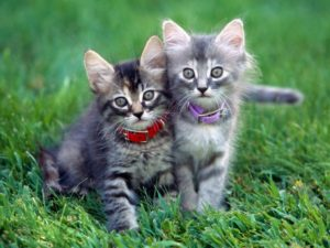 cats wallpapers funny pictures