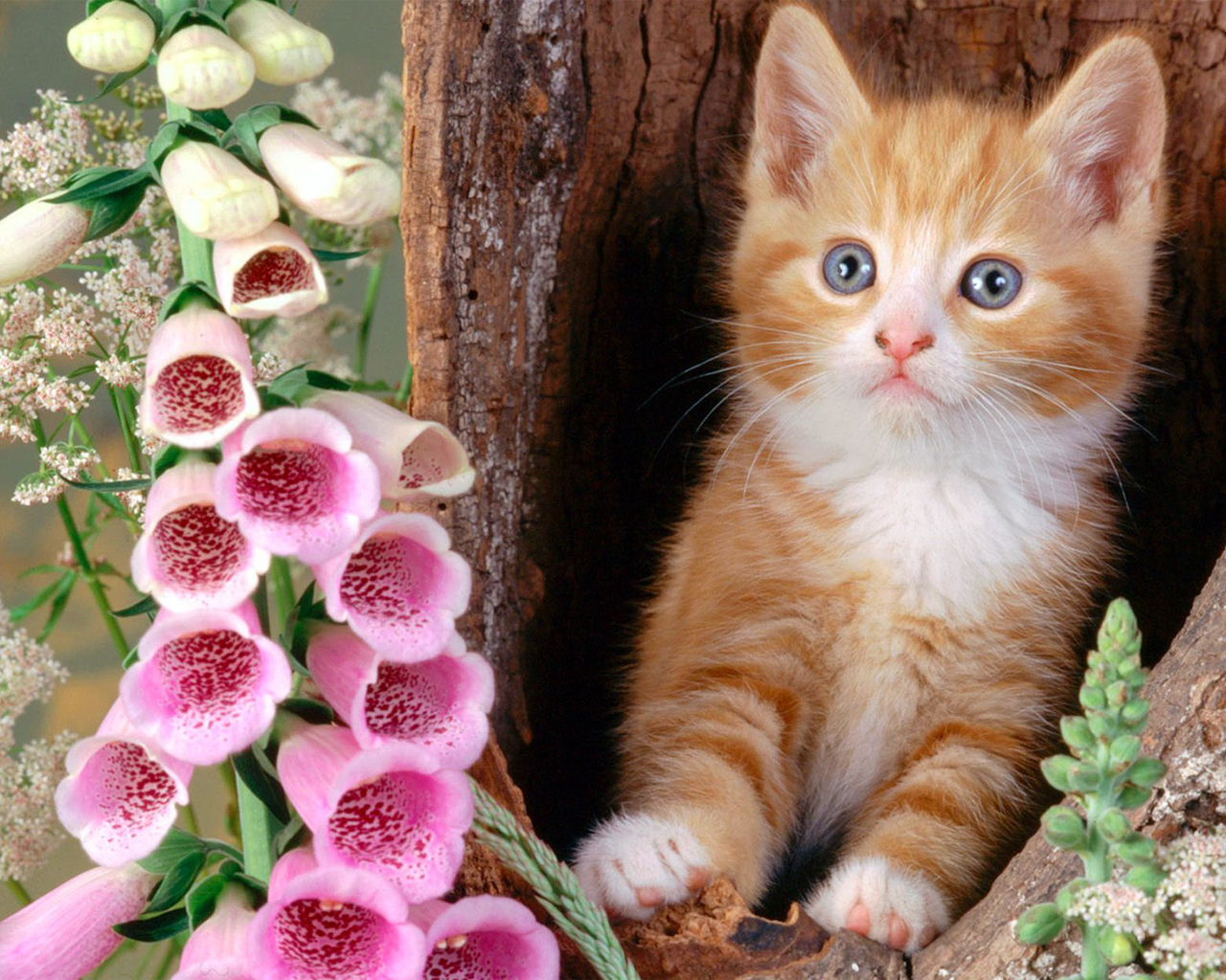 Cats Wallpapers New Free Download Hd Wallpapers