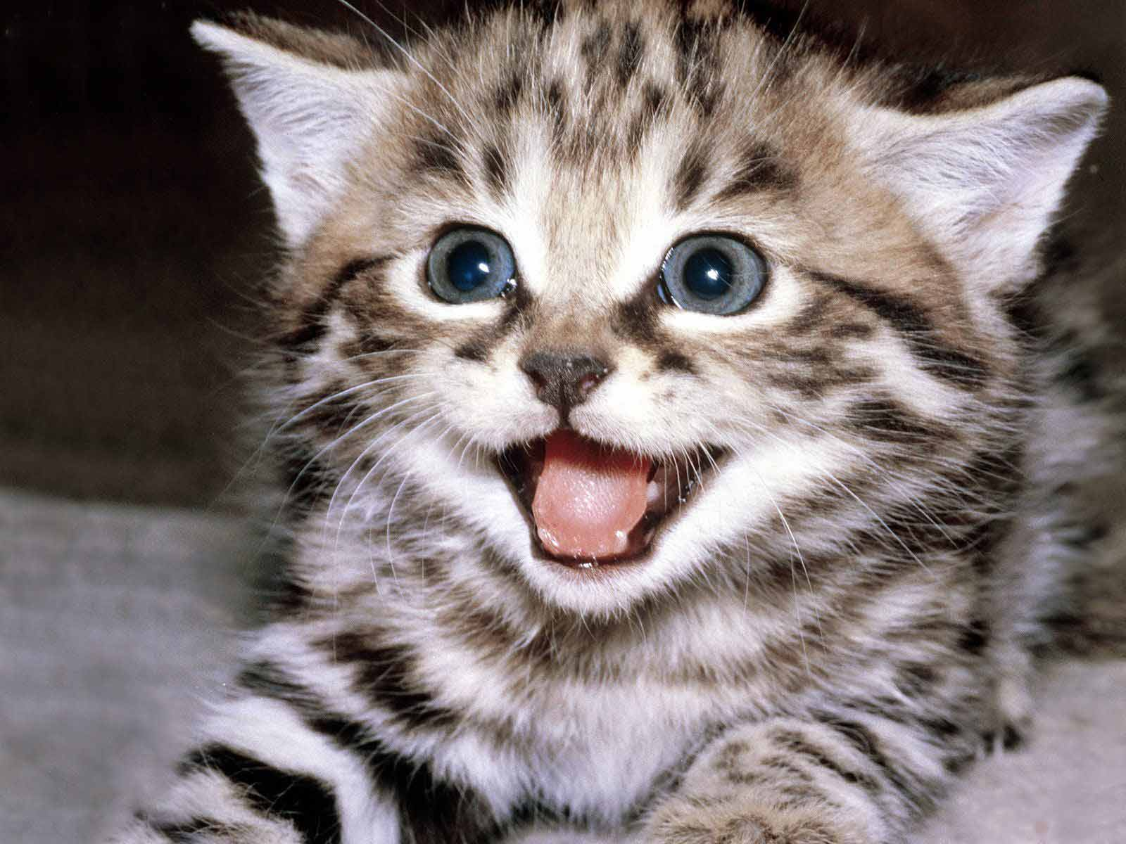 Cute Cats Wallpapers Free Download Hd Wallpapers