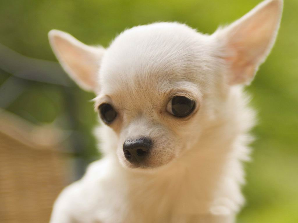 Cute Dog Puppy Hd Wallpapers Free Download Hd Wallpapers