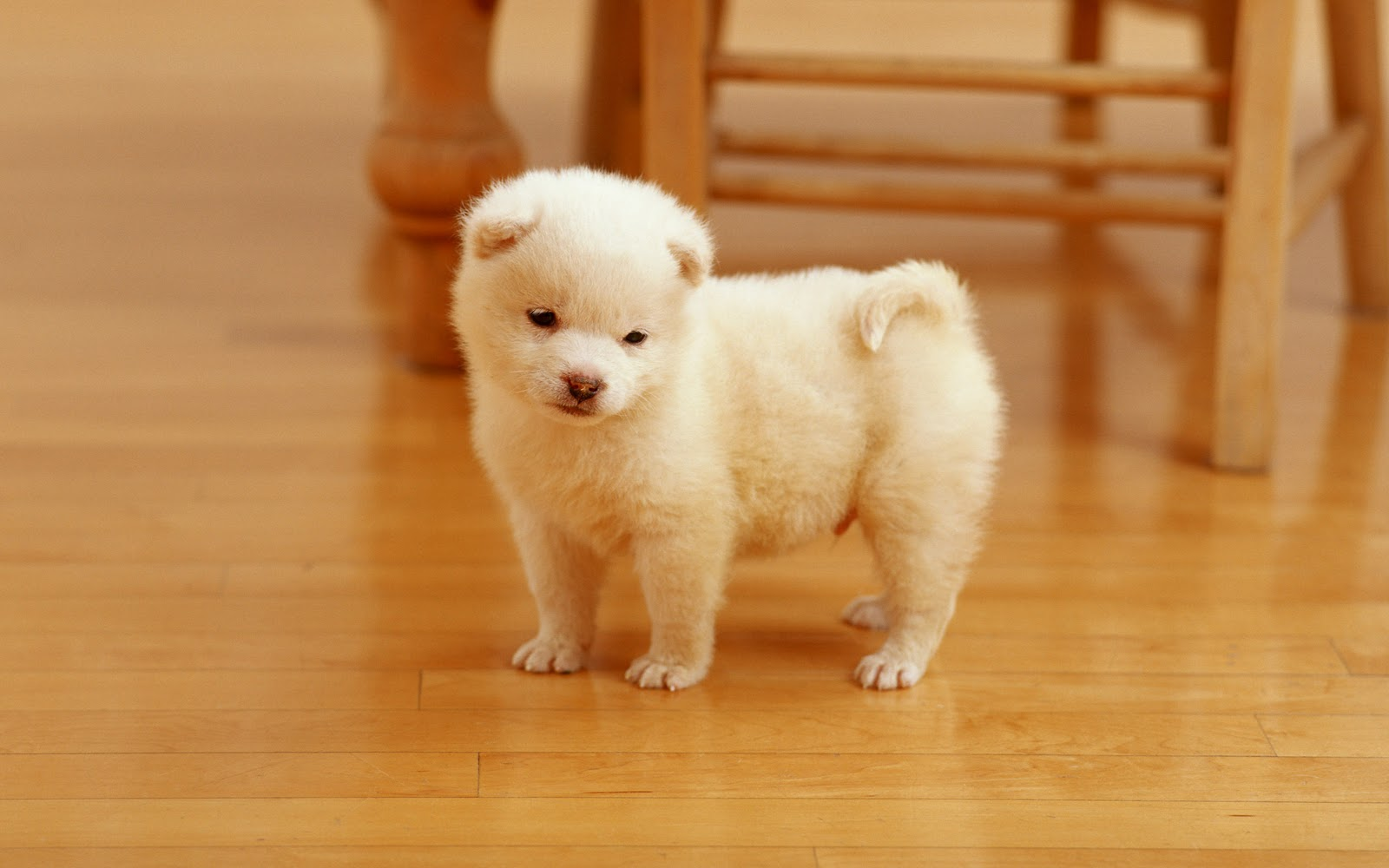 Cutest Puppy Hd Wallpapers Free Download Hd Wallpapers