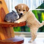 dog hd pics