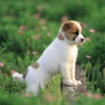 new dogs hd wallpapers