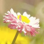 Summer flower in Hd