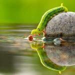 water animal wallpaper