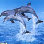 dolphin mobile Wallpaper