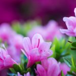 free hd flower wallpapers
